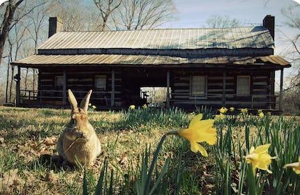 """""""Hazzard Hill"""" 1880 Breezeway Cabin & Farm"""